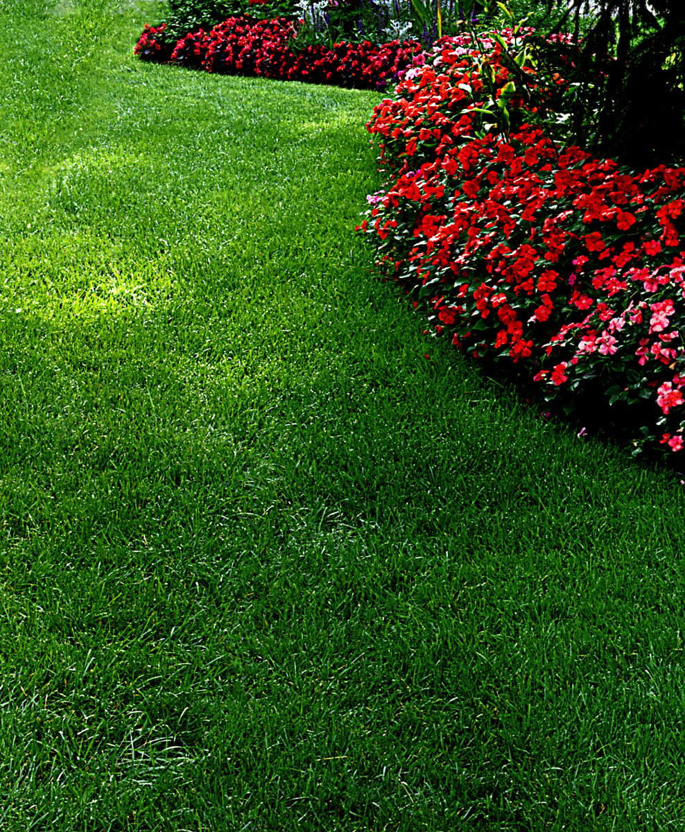 images of lawn care