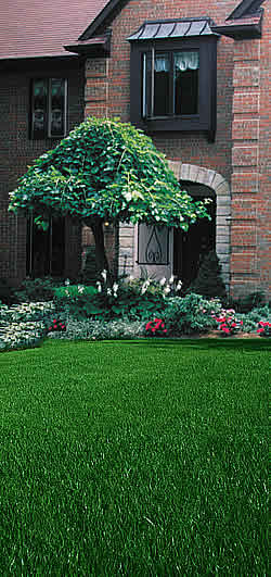 Lawn and Landscape Professional Care