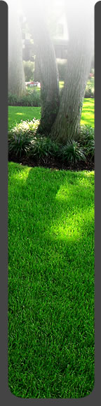Professional Lawn Care for Central Ohio